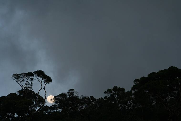 A full moon rises from behind the crestline forests that are the highlight of the Agasthyamala Biosphere Reserve.