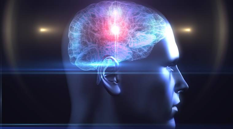 brain studies, brain pre-adapted for situations, brain prepared for situations, diversity of human behaviour, French National Institute of Health and Medical Research, inserm, primate brain, brain network, lifestyle news, brain science,