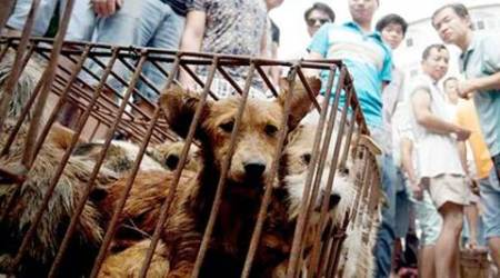 Protesters file a huge petition against China dog meat festival