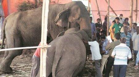 Pune: 4 animals stuck in Sangli; Rambo Circus says NGO must deliver themback