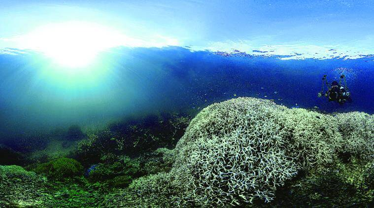 corals, corals bleaching, Coral reef ecosystems, global coral bleaching, National Oceanic and Atmospheric Administration, NOAA, white corals, Great Barrier Reef, coral