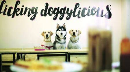 Puppychino, delhi dog cafe, india dog cafe, Delhi's first dog café, India's first dog café, first dog café, dog café, food news, dog lovers, talk news