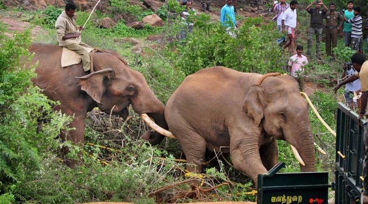 Elephant Coimbatore, elephant dead Coaimbatore, train hit elephant, dead elephant,  Marapalam, Madukkarai, Coimbatore, latest wildlife news, latest news, latest Coimbatore news