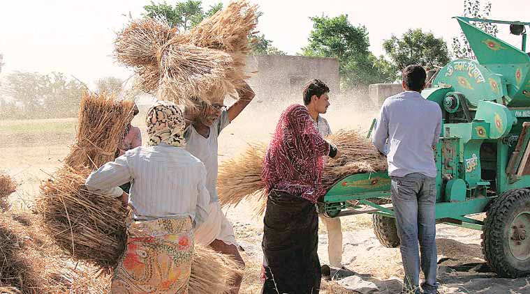 Agriculture Export Policy to be in line with WTO norms