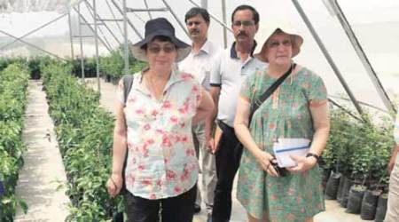 Extending shelf-life: Israel offers post-harvest management expertise in F&V