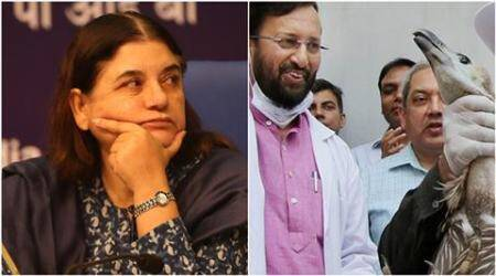 Maneka Gandhi, Prakash Javadekar, animal cruelty, vermin, environment ministry, ministry of environment and forests, animal killing india, monkey killing himachal, wild boar killing, government allows animal killing, animal rights india, animal cruelty by government, government killing animals, india news