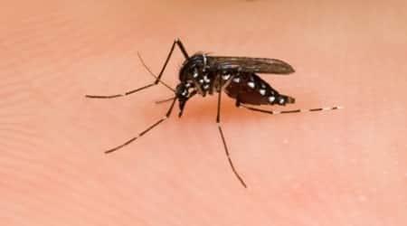Asian Tiger Mosquito (albopictus)