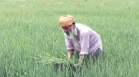 Crashing lease rentals in Punjab spell agricultural downturn