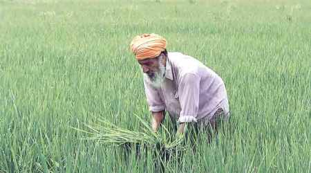 Paddy 'scam' pits Punjab govt against Punjab National Bank