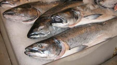 Chile's embattled salmon industry intensified antibiotic use in 2015: government