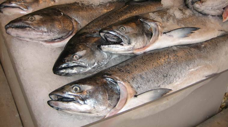 Chile, salmon, Chile salmon industry, Chile salmon, Chile salmon export, antiobiotics, antibiotics usage, antibiotics usage in salmon, chile environment, chile environment news, chile news, world news, latest news