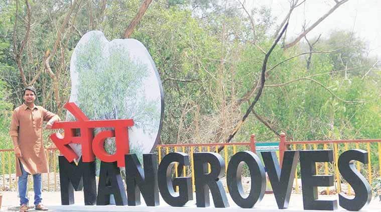 mumbai, mangrove, mumbai mangrove, mangrove fencing, mumbai mangrove fencing, kapil sharma, kapil sharma encroachment, kapil sharma mangrove encroachment