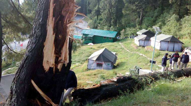 Two tourists were killed and one injured after green tree fell on their tent at a Eco- Tourism camp of the State Forest Corporation at Narkanda 65km from Shimla on Thursday. Express photo. 09.06.2016.