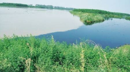 World Environment Day: 'Punjab river water unfit fordrinking'