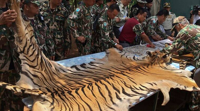 truck caught carrying two tiger skins and other animal parts from