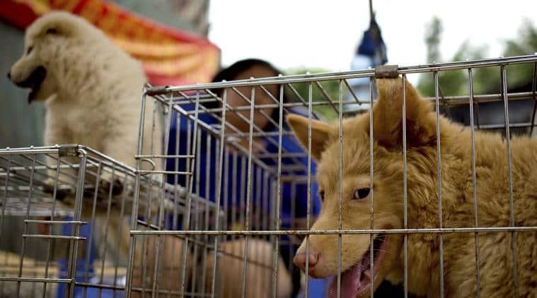 China dog meat eating festival, Yulin dog meat eating festival, dog meat eating festival, protests against dog meat eating festival, criticism dog meat eating festival, world news