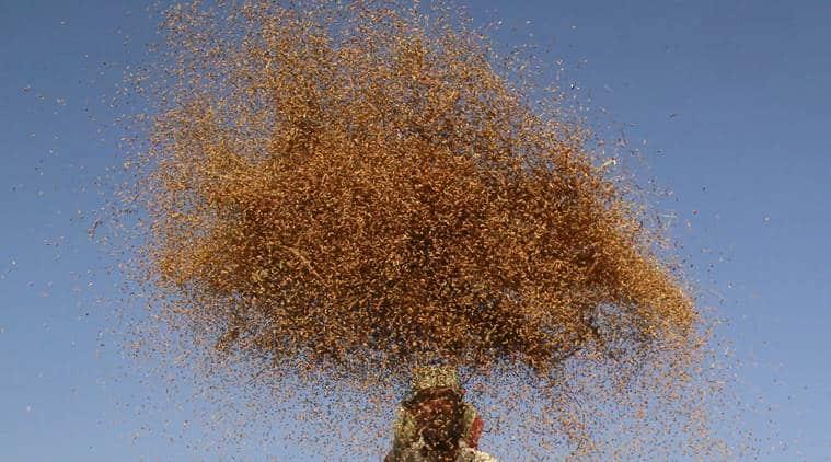 Demonetisation, rabi plantings, Demonetisation rabi crops, india news, indian express, indian express news