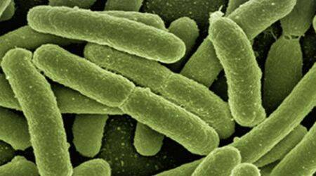 Bacteria-powered batteries coming soon to smartphones