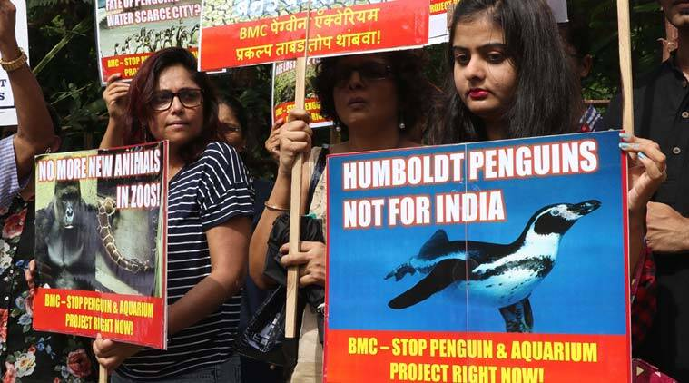 BMC, Penguins, mumbai penguins, byculla zoo, mumbai news,