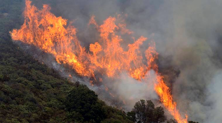 California wildfire, California news, world news,