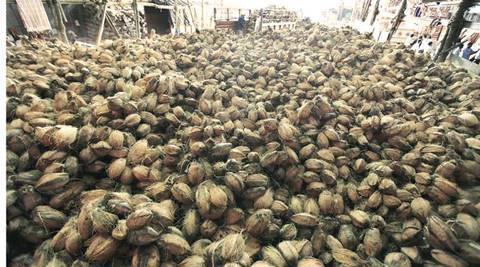 DRI unearths hawala dealings by exporters of dry coconuts