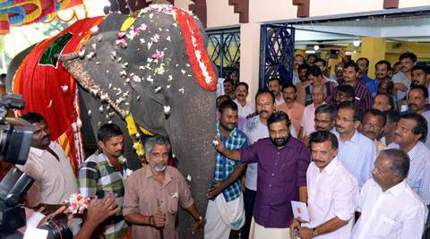 kerala elephant, oldest living elephant, oldest elephant, kerala oldest elephant, dakshayani elephant, oldest elephant, dakshayani kerala elephant, kerala news