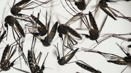 Zika, Zika virus, Zika mosquito, lifestyle news, world news, International news, Zika virus news,