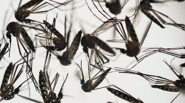 US lawmaker mosquito, US house mosquito, US house floor mosquitos