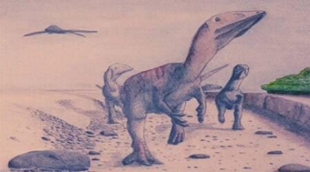 megaraptorids, Argentina dinosaur discovery, dinosaur discovery, megaraptorid discovery, fossils in Argentina, megaraptorids evolution, tech news, science news