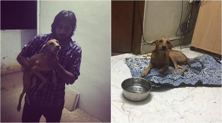 The dog they have named Bhadra is unable to walk and in under treatment