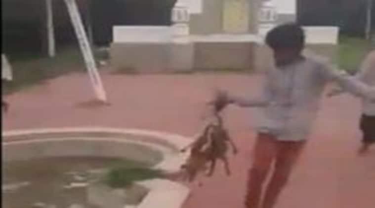 Hyderabad, Dogs burnt alive, puppies burnt alive, Dogs killed, Hyderabad dogs killed