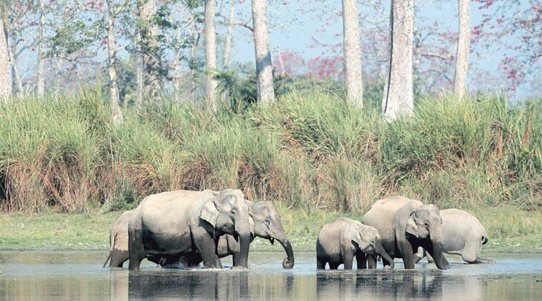 An electric fence erected by Nepal has blocked elephants' migratory route. (Source: Express/File photo)