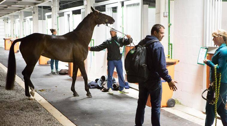 First Horses Arrive At Rio 2016 Olympics Venue For