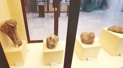 File photo of Fossils found from foothills of Shivalik Hills at Govt Museum and Art Gallery Sector 10 Chandigarh