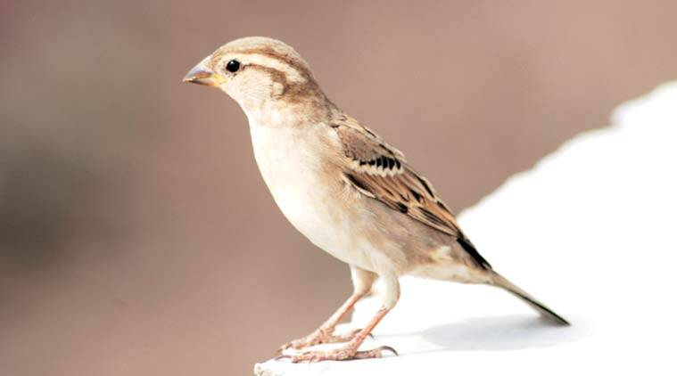 The theme is save the house sparrow.  (Express Photo by Gurmeet Singh)