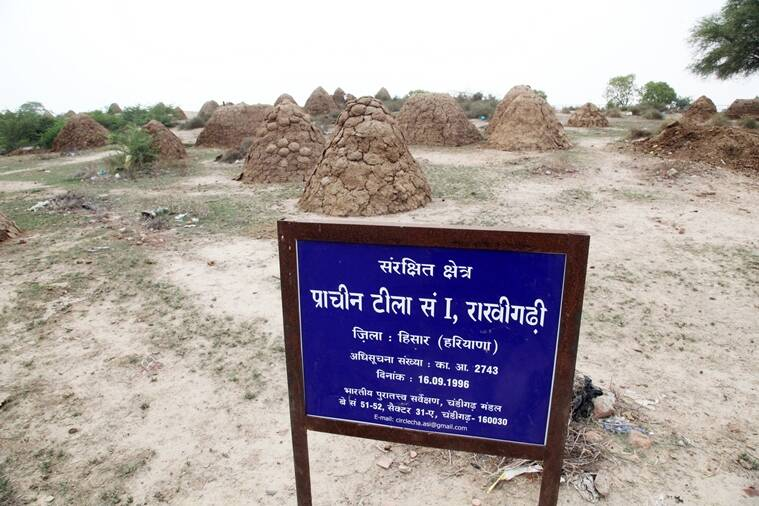 Mound 1 at Rakhigarhi. (Express photo by Jaipal Singh)