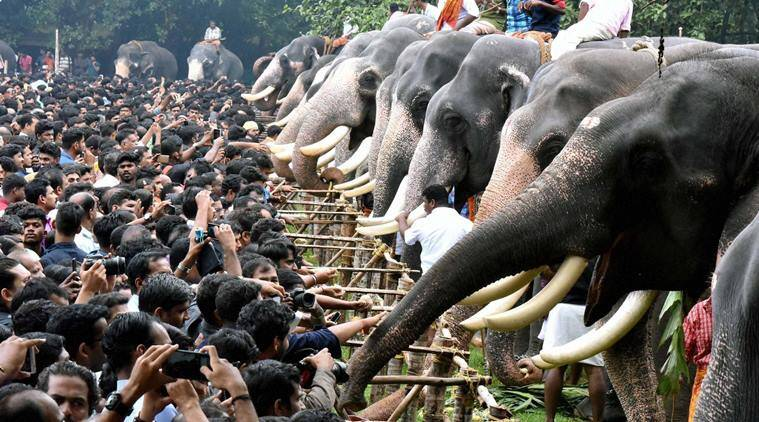 temple elephant, kerala temple elephant, elephant torture, temple elephant torture, kerala temple animal torture, animal rights