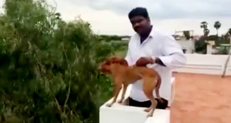 man throws dog from roof video, man throws dog from roof viral video, dog thrown from roof viral video, dog thrown from roof video, chennai man throws dog, Chennai Dog, Dog Thrown Off Roof, Dog Thrown Off Terrace, Animal Abuse, viral video, animal rights, horrific video of dog thrown, Social media, Chennai man who flung dog off roof, india news