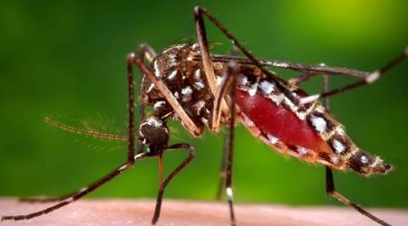 Mosquito-origin found at nearly 50,000 households: MCD
