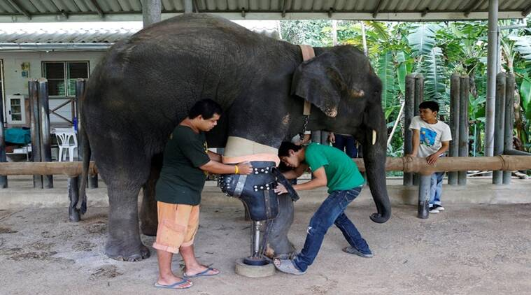 Mosha was wounded after she stepped on a landmine/ Reuters