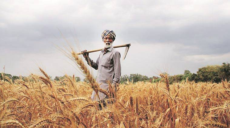 farmers, india farmers, narendra modi, arun jaitley, indian farmers, indian farmers income, india agriculture, india agricultural revenue, agricultural policies, farmers, farmer suicide, indian farmer income, narendra modi, nda government, ministry of agriculture, pradhan mantri fasal bima yojana, pradhan mantri krishi sinchayee yojana, soil health cards, indian express