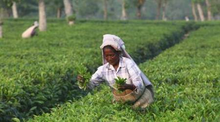 Minister of State for Commerce Nirmala Sitharaman said in Lok Sabha that a proposal has been mooted to amend the Tea (Marketing) Control Order 2003 so as to define mini and micro factories