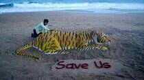 International Tiger Day: How can we keep the tiger burning bright?