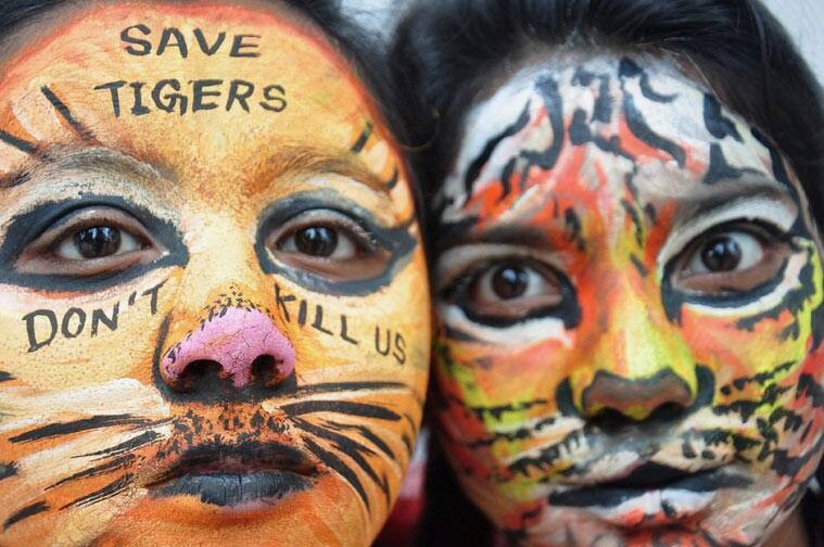 tiger day, international tiger day, india tiger conservation, jay tiger, india jay tiger missing, mumbai tiger missing, maharashtra tiger missing, india tiger missing, india tiger jay, india news, latest news
