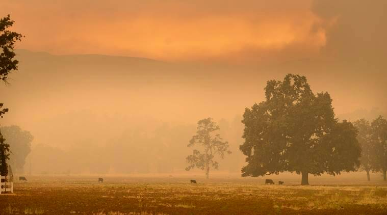 Cows graze at a ranch off Hesperia Road as a wildfire burns toward the southwest near the border of southern Monterey County, Calif., on Thursday, Aug. 25, 2016. (David Royal/The Monterey County Herald via AP)