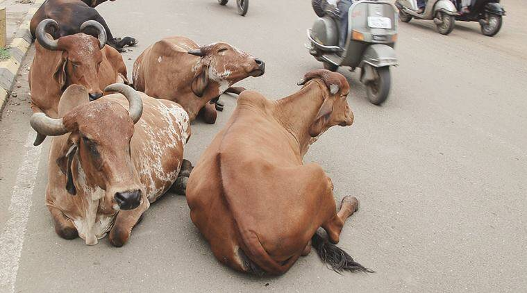 Cow protectors, gaushala's, Punjab, cow news, latest news,  gau rakshaks, gaurakshaks ID cards, latest news, india news
