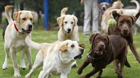 Enter 'Guinness World Record' with your dog at India's biggest pet festival `Pet Fed`