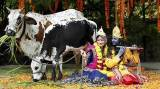 Janmashtami: How the birth of Krishna is celebrated across India
