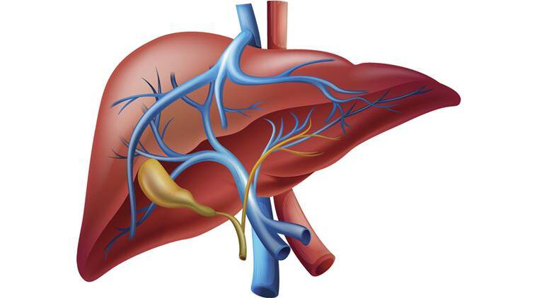 Health tips: 7 ways to prevent liver diseases | Lifestyle News,The Indian Express