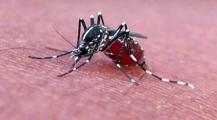 Zika virus, Zika virus spreading through mosquito offspring, zika virus passed on by female mosquitoes, spraying cannot eliminate Zika virus
